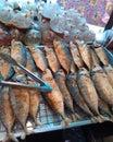 鲭鱼鱼 免版税库存图片