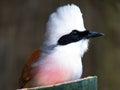 鸟背景 库存图片