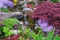 διαφορετικό rivulet φυτών Στοκ Φωτογραφία