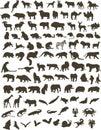 100 zvieratá