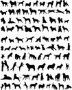 100 dogs Royalty Free Stock Image