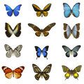 12 different butterflies Stock Image