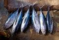 2013_03_16_Somalia_Fishing g