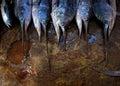 2013_03_16_Somalia_Fishing j
