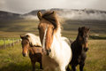 3 Horses on Green Grassfield With Fogs and Mountain on Background