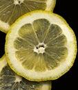 3 Lemon Slices on Black background Stock Image