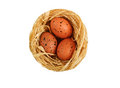 3 small eggs Royalty Free Stock Photography