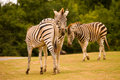3 zebras Royalty Free Stock Images