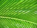 美丽的叶子棕榈树 免版税图库摄影