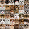 36 têtes de chat Photographie stock