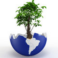3d globe shell with tree and sand Stock Photo