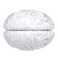 3d white human brain. View from above Royalty Free Stock Photo