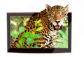 3D wildlife TV Royalty Free Stock Images