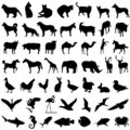 50 animal vector Royalty Free Stock Photos