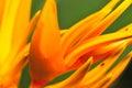 7 μακρο σειρές λουλουδιών Στοκ εικόνα με δικαίωμα ελεύθερης χρήσης