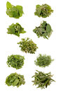 9 Herbs Stock Photography