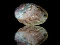 Abalone shell Royalty Free Stock Photos
