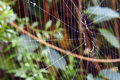 Abandon spider web at a tree Royalty Free Stock Photography