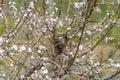 Abandoned bird nest on a tree Stock Photo