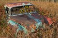 Abandoned car an antique in a grassy field in fall wild raspberries growing around and in Royalty Free Stock Image