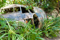 Abandoned crashed plane in Kuranda, Queensland Royalty Free Stock Photo