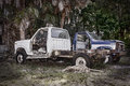 Abandoned old pick up trucks a grunge scene with a pair of wrecked in the woods Royalty Free Stock Images