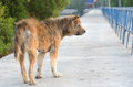 Abandoned stray dog standing on the road Stock Photos