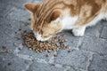 Abandoned street cat eating food Royalty Free Stock Photo