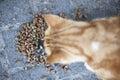 Abandoned street cat eating food. Royalty Free Stock Photo