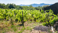 Abandoned vineyard and rural house on Etna Royalty Free Stock Photo