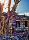 Abanonded tourquoise house in mojave national preserve and a dead tree with the sun shining through the branches Royalty Free Stock Image