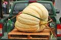 Abóboras gigantes Fotos de Stock Royalty Free