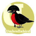ABC Cartoon Umbrellabird