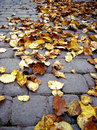 Abscissed leaves on a sett autumn Stock Photo