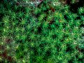 Abstract of abstruse connection shape green tone Royalty Free Stock Photo