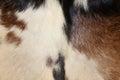 Abstract Animal Fur Texture