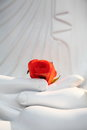 Abstract Art-Red flower and hands of white statue Royalty Free Stock Images