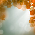 Abstract autumn background evening light with leaves and Stock Image