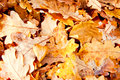 Abstract autumn background, yellow leaves Royalty Free Stock Photo