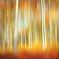 Abstract autumn forest motion blur of trees in a with colors Royalty Free Stock Photos