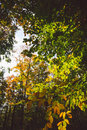 Abstract autumn forest view Royalty Free Stock Photo