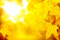 Abstract autumn yellow leaves nature background Royalty Free Stock Photo