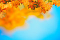 Abstract autumnal backgrounds with beauty bokeh Royalty Free Stock Photography