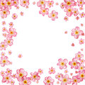 Abstract background with beautiful pink cherry blossom.