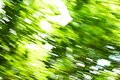 Abstract background blur green tree, moving camera while shooting. Royalty Free Stock Photo