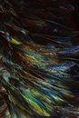 Abstract background colorful and dark shadow of Feather Royalty Free Stock Photo