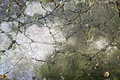 Abstract background. Cracked concrete texture. Royalty Free Stock Photo