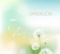Abstract background with flower dandelion decorative romantic Royalty Free Stock Image