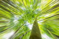 Abstract background of forest. Radial zoom effect defocusing fil Royalty Free Stock Photo