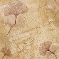 Abstract Background Ginkgo Leaves Royalty Free Stock Image
